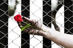 Des mains sales sont attachées avec des roses attaché avec amour Image stock