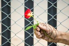 Des mains sales sont attachées avec des roses attaché avec amour Images stock