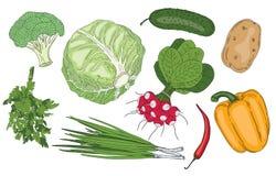 Des neuen organische Vektorsammlung Frühlingsgrüns des Gemüses und der Kräuter Stockfoto