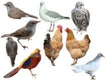 Oiseaux une collection Images stock