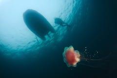 Des ombres dans la lumière, méduses sous l'eau Photo stock
