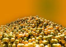 Des oranges sont maintenues pour se vendre sur le marché dans la saison d'été indien de la Saint-Martin Photos stock