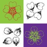 Des pétales de fleur de Corolla sont admirablement localisés illustration libre de droits