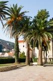 Des palmiers sur le fond des bâtiments de la vieille ville sont faits en pierre avec un toit carrelé rouge photos libres de droits