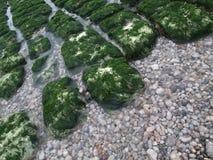 Des pierres peu profondes sont couvertes d'algues lumineuses photo stock