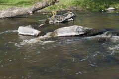 Des pierres sont lavées par un courant d'eau de rivière image libre de droits