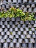Des plantes en pot sont empilées très étroitement Images libres de droits