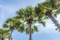 Des plusieurs de la plage de palmier Images stock