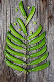 Des pois sont présentés sous forme d'arbre sur un fond en bois Photos stock