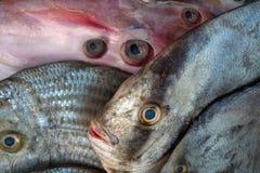 Des poissons de mer et la carcasse exotiques peu communs de calmar à vendre, poisson sont arrangés de sorte que beaucoup de yeux Photographie stock libre de droits