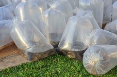 Des poissons sont maintenus dans des sachets en plastique préparant pour être libéré en rivière de Saigon pendant le jour nationa Photos stock
