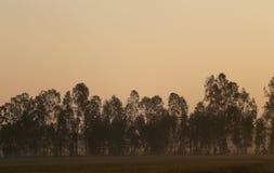 Des prés sont couverts par le grand arbre Image libre de droits