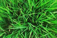 Des Rasengrases des grünen Grases Draufsicht, Klimakonzept, grüne Co stockfotos
