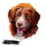 Des Retrieverhundeaquarell-Porträts Nova Scotia-Ente läutende digitale Kunst Plakat mit Haustierzuchtnamen, reinrassige Vertretun vektor abbildung