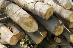 Des rondins sont coupés dans la forêt Photographie stock