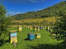 Des ruches sont exposées sur une clairière verte en montagnes Photo libre de droits