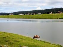 DES Thaillère, Svizzera della bacca Immagini Stock Libere da Diritti