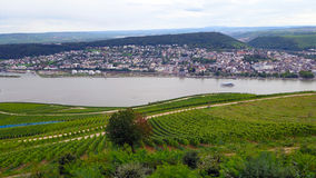 des vignobles le long du Rhin Photo libre de droits