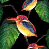 Des von Hand gezeichneten nahtloser Hintergrund Eisvogel-Vektors des Aquarells Lizenzfreie Stockfotografie
