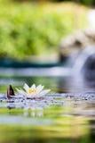 Des Weiß Auflage lilly in contre jour Konzept: Meditation, BADEKURORT, Entspannung Stockfoto