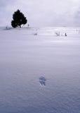 Des Winters Leben noch Stockbild