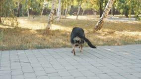 Desabilitou o cão preto no abrigo animal vídeos de arquivo