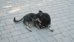 Desabilitou o cão preto no abrigo animal video estoque