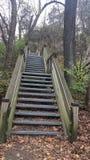 Desafío hambriento de las escaleras de la roca Fotos de archivo