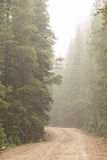 Desafio da estrada de terra na névoa Imagem de Stock