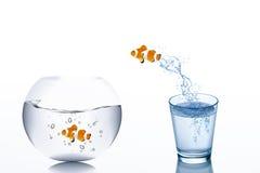 Desafio do negócio e conceito do crescimento: Escape do peixe dourado da água no vidro que salta ao fishbowl ilustração stock