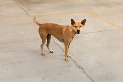 Desamparados del perro de Brown Imagen de archivo