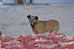 Desamparados del perro perdido Fotos de archivo libres de regalías