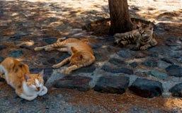 Desamparados tres gatos de yprus del ¡de Ð fotografía de archivo libre de regalías
