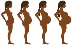 Desarrollo del embarazo en cuatro etapas Foto de archivo libre de regalías
