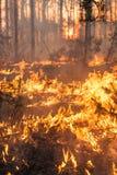 Desarrollo del incendio forestal en fondo de la puesta del sol imagen de archivo