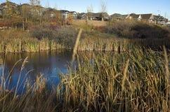 Desarrollo ecológico Foto de archivo