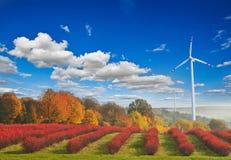 Desarrollo sostenible Imagenes de archivo