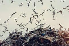Desastre da ecologia, gaivotas que voam sobre uma operação de descarga Foto de Stock