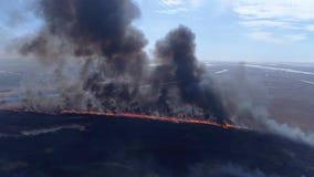 Desastre de la ecología en la naturaleza, fuego grande rápido por el campo seco con el humo que sube al cielo cerca del río, opin almacen de video