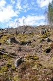 Desastre de la tala de árboles Imagen de archivo libre de regalías