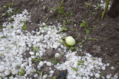 Desastre de la tormenta del granizo en jardín Imagenes de archivo