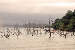 Desastre del tsunami foto de archivo