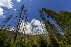 Desastre ecológico da floresta inoperante imagem de stock