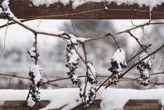 Desastre natural con las uvas fotografía de archivo libre de regalías