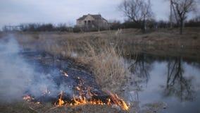 Desastre natural, hierba del bastón del fuego y arbusto de destrucción en el riverbank en pantano almacen de video