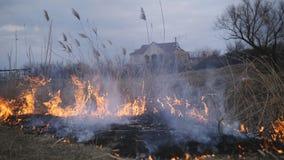 Desastre natural, hierba del bast?n del fuego y arbusto de destrucci?n en el riverbank en pantano almacen de video