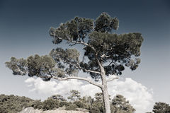 Desaturated image of tree against the sky Royalty Free Stock Photography