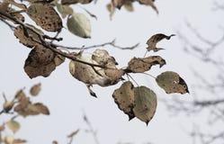 Desaturated Niederlassung im Herbst stockbilder