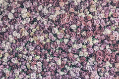 Desaturated Rose wall background Royalty Free Stock Image