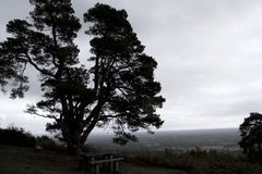 Desaturated silhouet van grote pijnboomboom tegen horizon royalty-vrije stock foto